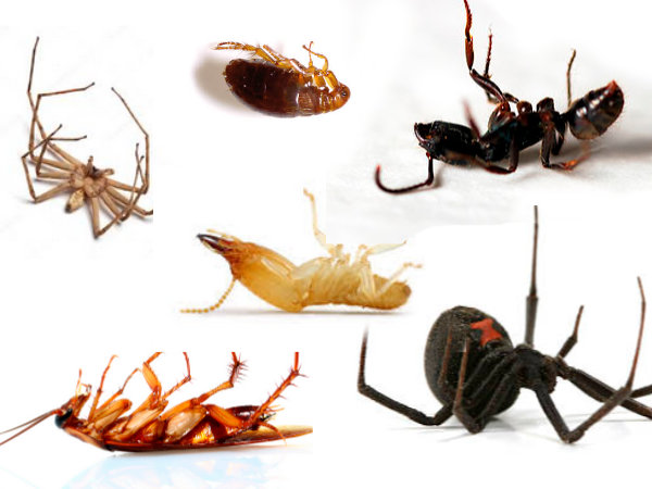 pest-control-what-we-offer